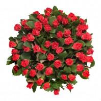 Букет из 59 красных роз Эль Торо «Эсмеральда»