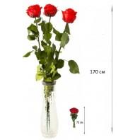Букет из 3 красных роз  «Стрелы Амура»