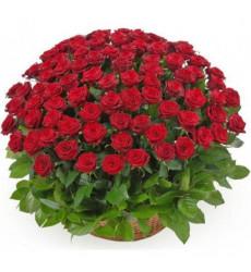 Траурная корзина №26 из живых цветов «100 красных роз»