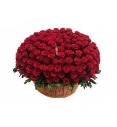 Траурная корзина №54 из живых цветов «250 бордовых эквадорских роз»