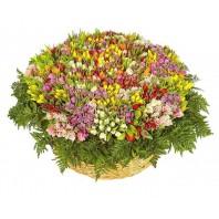 Корзина цветов с 1001 разноцветным тюльпаном «Объятия весны»