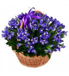 Корзина цветов со 101 ирисом «Прикосновение весны»
