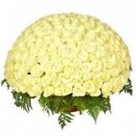 Корзина цветов с 301 белой розой Аваланж «Признание Афродите»