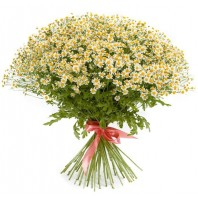 Букет из 51 ромашки «Весеннее очарование»