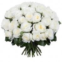 Букет из 35 белых пионовидных роз «Ангельский хвостик»
