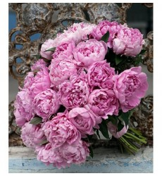 Букет из 31 пиона Sarah Bernhardt «Сплошная романтика»