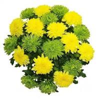 Букет из 19 одноголовых хризантем «Очей очарованье»