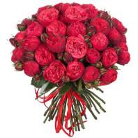 Букет из 35 красных пионовидных роз «Красный ажур»