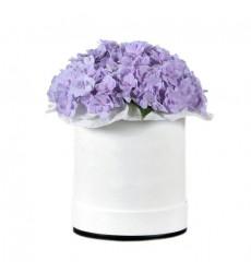 Цветы в коробке  с 3 гортензиями «Ангельская песня»