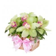 Цветы в коробке  с 7 зелёными орхидеями и зеленью «Оливковые грёзы»