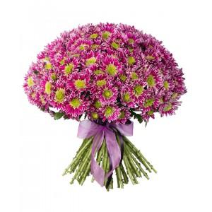Букет из 25 кустовых хризантем «Амарантовый закат»