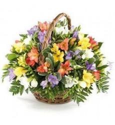 Корзина цветов с 39 фрезиями «Изольда»