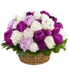 Корзина цветов с 35 пионами «Хвост звезды»