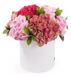Цветы в коробке с 5 гортензиями «Дуновение нежности»