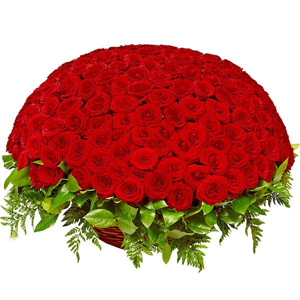 Траурная корзина №10 из живых цветов «100 роз, папоротник, салал. »