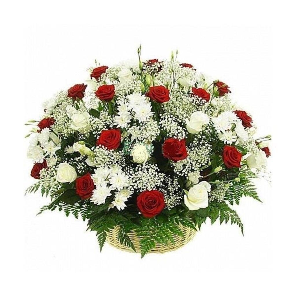 Траурная корзина №22 из живых цветов «50 красных и белых роз, хризантемы, гипсофила, папоротник.»