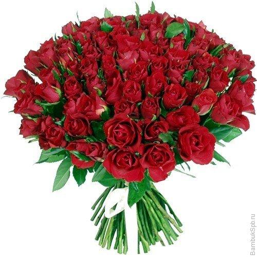 Букет из 101 розы красного цвета  «Антонелла»