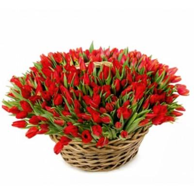 Корзина цветов со 101 тюльпаном «Коко Шанель»