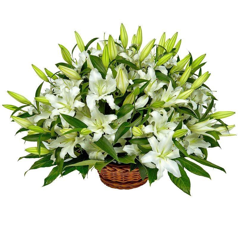 Корзина цветов с 25 белыми лилиями «Истинная красота»