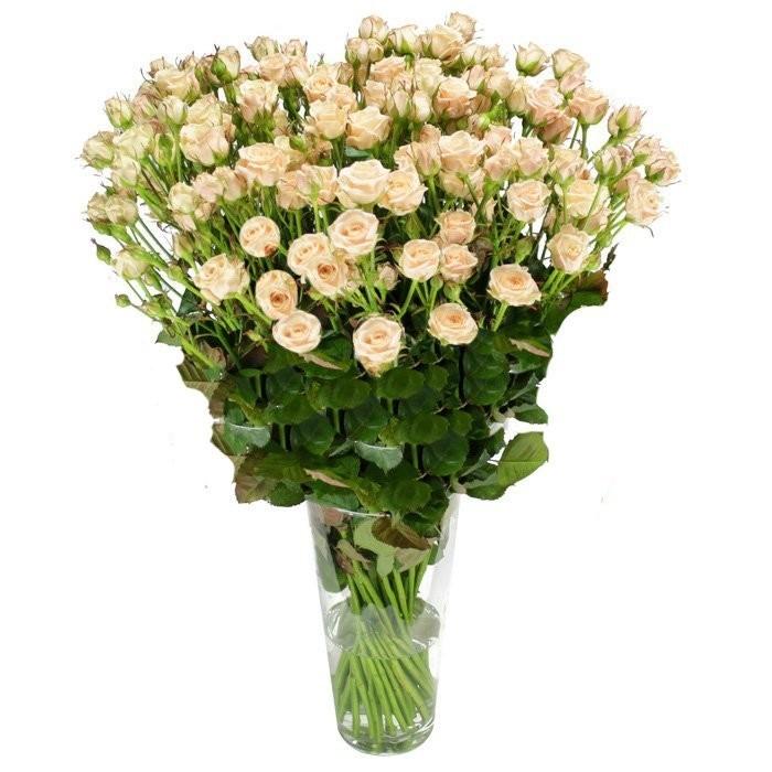 Букет из 35 кремовых кустовых роз «Дуэт сердец»