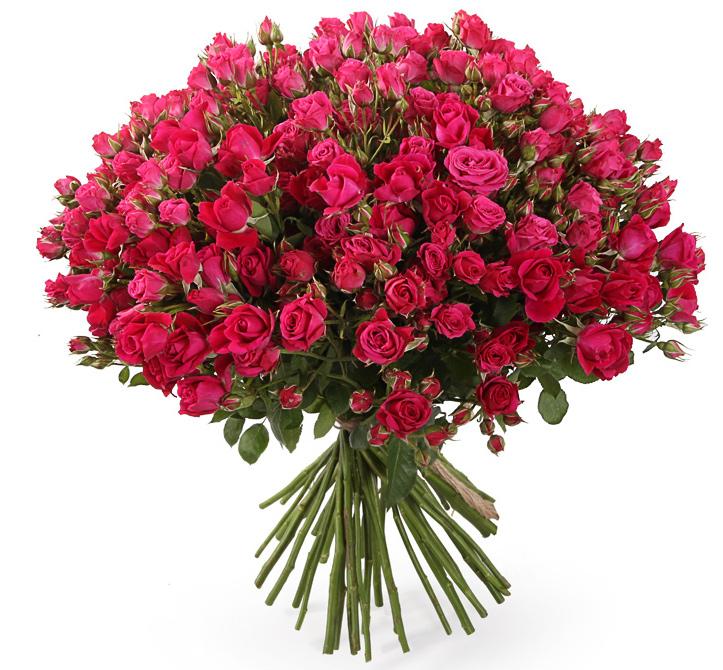 Букет из 51 кустовой розовой розы «Розовая лагуна»