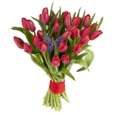 Букет из 31 малинового тюльпана «Весенняя гроза»