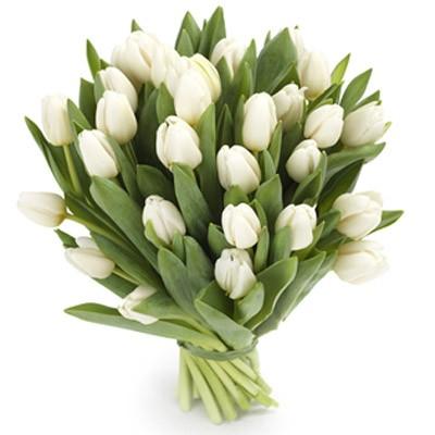 Букет из 31 белого тюльпана «Белоснежный рассвет»