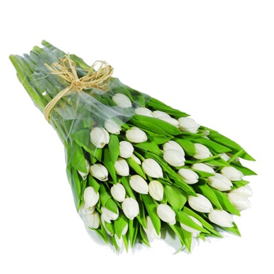 Букет из 35 белых тюльпанов «Белые мечты»