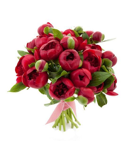 Букет  из 15 пионов Red Charm «Бордовый шарм»