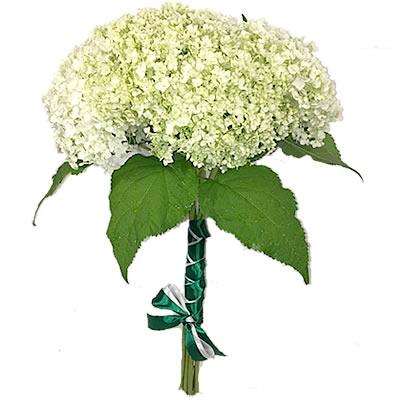 Букет невесты из 7 гортензий «Мечтательная улыбка»