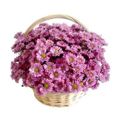 Корзина цветов с 25 кустовыми хризантемами «Цветочный флёр»