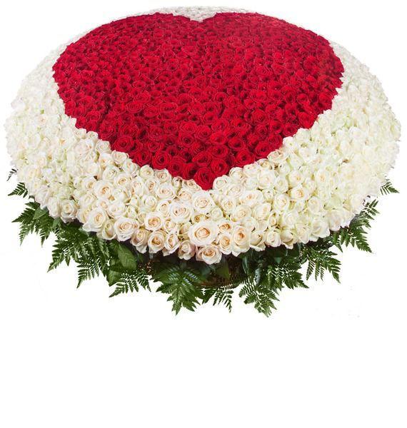 Корзина цветов с 500 белыми розами и 501 розой Гран При «Сердце ловеласа»