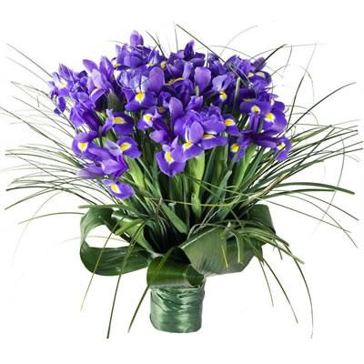 Букет из 45 ирисов «Ласковый фиолет»