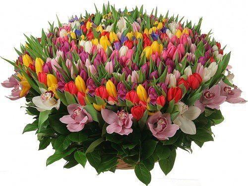 Корзина цветов из 301 тюльпана, 15 орхидей и 24 ирисов «Цветочный лабиринт»