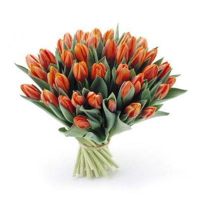 Букет из 49 тюльпанов «Цветы Белоснежки»