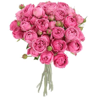 Букет из 17 кустовых пионовидных роз «Розовое эскимо»