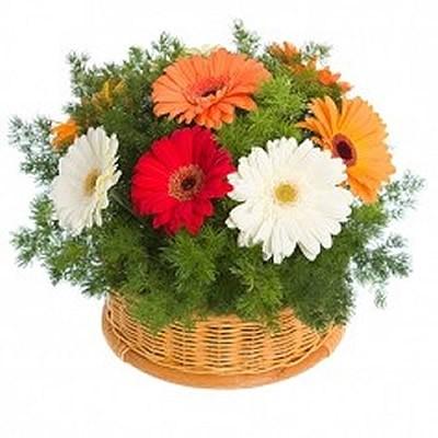 Корзина цветов с 9 герберами и зеленью «Дворцовый сад»