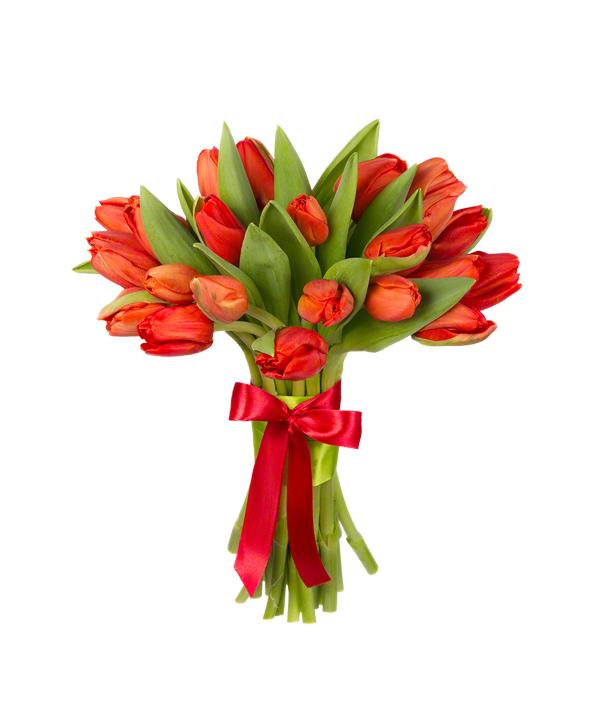 Букет из 25 красных тюльпанов «Голландская цветочница»